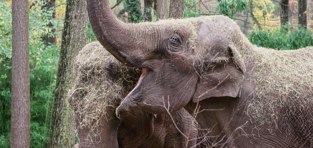 Dagje uit - Burgers Zoo
