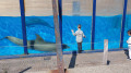 Dagje uit - Dolfinarium Dolfijnen kijken