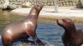 Dagje uit - Dolfinarium Zeeleeuwen