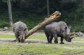 Dagje uit - Burgers Zoo Neushoorn 1