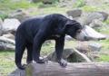 Dagje uit - Burgers Zoo beer