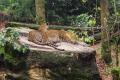 Dagje uit - Burgers Zoo panters