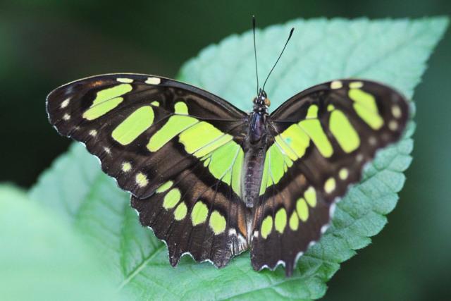 Dagje uit - Burgers Zoo Vlinders