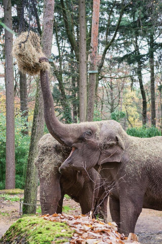 Dagje uit - Burgers Zoo olifant 2
